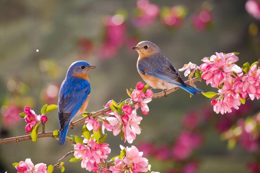 pair-of-birds-on-a-branch